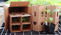 جابجایی گیاهان